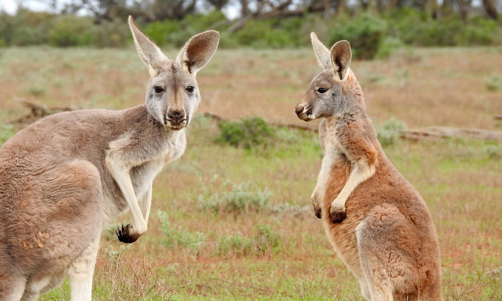study-australia4